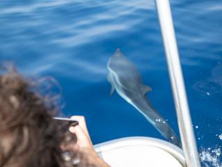 Admirez les dauphins et prenez soin de l'environnement !