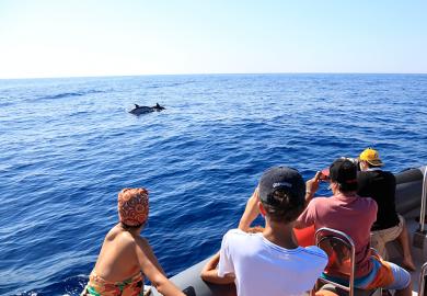 En pleine mer et au plus près des dauphins !