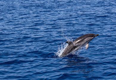 Des sorties en mer pour approcher les dauphins